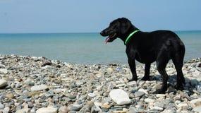 Alegria do cão na praia imagens de stock royalty free