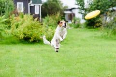 Alegria do verão no pátio traseiro com o disco do cão e do voo Fotografia de Stock