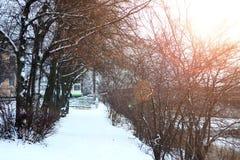Alei drogi przemian parka zima Zdjęcie Royalty Free