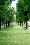 alei drzewa Zdjęcia Royalty Free