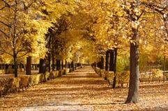 alei jesień Obraz Royalty Free