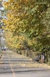 alei jesień format surowy Zdjęcie Stock