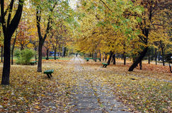 alei jesień park Fotografia Stock