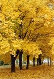 alei jesieni Zdjęcia Royalty Free