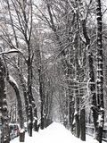 alei miasto zakrywający śnieg zdjęcia royalty free