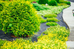 Aleia bonita no parque Projeto ajardinando do jardim Imagens de Stock Royalty Free