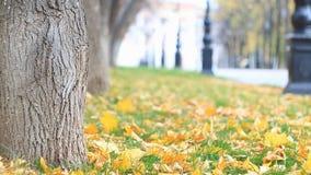 A aleia colorida no parque do outono com luzes de rua, folhas é fallng O vento pesado funde as folhas de bordo ausentes Movimento filme