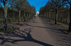 Aleia da árvore Fotografia de Stock