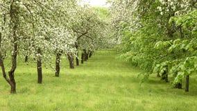 Aleia da árvore de Apple na exploração agrícola Tiro liso do slider Dia limpo e brilhante filme