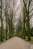 Aleia da árvore em um dia chuvoso fotografia de stock royalty free