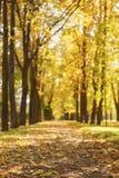 Aleia da cidade do outono com as árvores douradas da queda e as folhas caídas Imagem de Stock Royalty Free