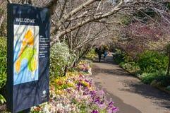 Aleia da mola em Sydney Royal Botanic Garden Imagens de Stock