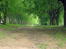 Aleia das árvores no parque foto de stock