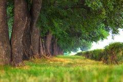 Aleia das árvores no parque Imagem de Stock
