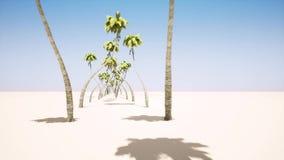 Aleia das palmeiras ilustração do vetor
