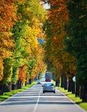 Aleia de árvores de castanha Foto de Stock Royalty Free