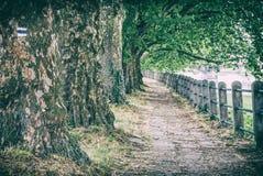 Aleia de árvores do sicômoro e de trilhos, filtro análogo fotos de stock