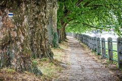 Aleia de árvores e de trilhos do sicômoro Imagens de Stock Royalty Free