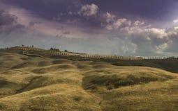 Aleia de Cypress Imagem de Stock
