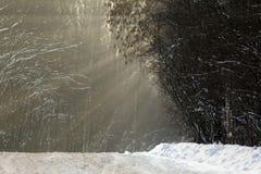 Aleia de Forest Park do outono de Yin Yang Imagem de Stock Royalty Free