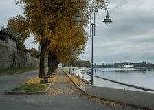 aleia do outono na margem na névoa foto de stock