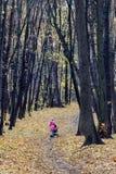 Aleia do vidoeiro no outono atrasado Imagem de Stock Royalty Free