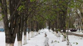 A aleia em que se encontra a neve, um fenômeno raro da neve na primavera na folha verde video estoque