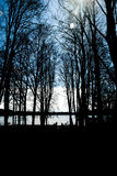 Aleia escura da árvore Fotografia de Stock Royalty Free