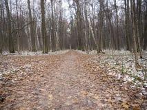 Aleia larga da sujeira na floresta do outono cercada com árvores Imagens de Stock Royalty Free