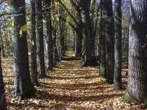 Aleia na floresta no outono fotografia de stock