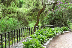 Aleia no parque fora do arbusto lilás da cerca Imagens de Stock Royalty Free