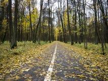 Aleia reta longa do asfalto no parque do outono Imagem de Stock