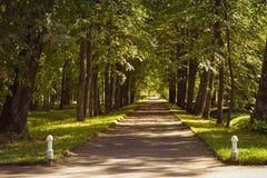 Aleia transversal em Oranienbaum Imagem de Stock