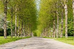Aleia verde Imagem de Stock Royalty Free