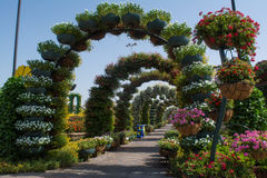 Aleia verde bonita surpreendente da arcada feita das flores nos potenciômetros Imagem de Stock