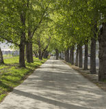 Aleia verde em Novosibirsk Imagem de Stock Royalty Free
