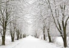 aleja śnieg fotografia stock
