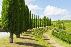 aleja cyprys Tuscany obraz stock