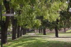 Aleja drzewa obrazy royalty free