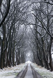 Aleja drzewa Obraz Stock