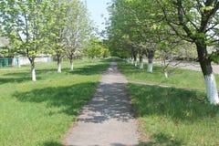 Aleja drzewa Zdjęcie Royalty Free
