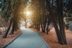Aleja, footpath cyprysu parka opóźniona jesień Fotografia Stock