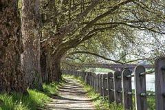 Aleja jaworowy drzewo i poręcz, footpath scena Obraz Stock
