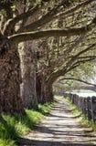 Aleja jaworowy drzewo i poręcz, footpath scena, pionowo com Obrazy Stock