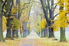 aleja jesienna Obrazy Royalty Free