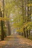 aleja jesienna Zdjęcia Stock
