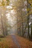 aleja jesienna Zdjęcie Royalty Free