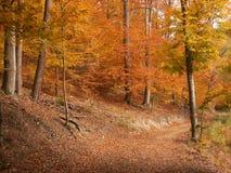 aleja jesienna obraz royalty free