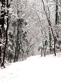 aleja lasów śnieg Zdjęcie Royalty Free