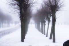 aleja mgłowa Zdjęcie Stock